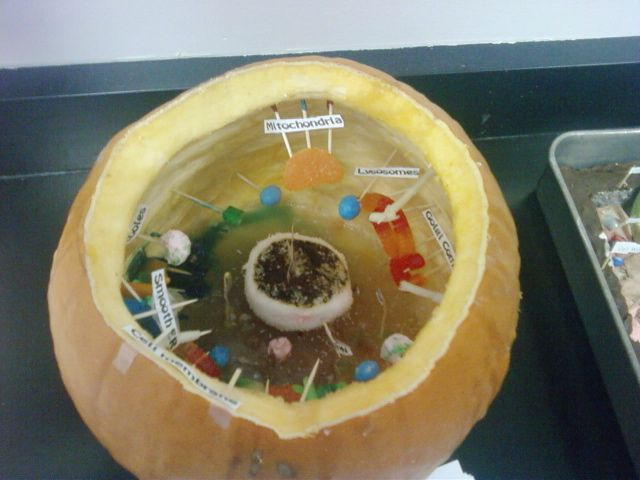 3D Edible Plant Cell Project http://www.wahooschools.org/vnews/display.v/ART/4adde88d21e05