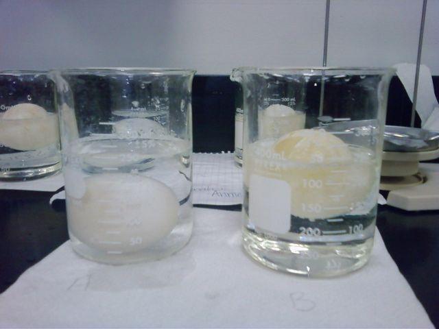 lab 1 egg osmosis and Lab 1 osmosis & diffusion sample 1 sample 2 sample 3  osmosis diffusion  lab report, egg osmosis lab report, lab report on osmosis and cells, osmosis and .